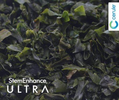Undaria Pinnatifida Seaweed is a key ingredient in Cerule StemEnhance Ultra