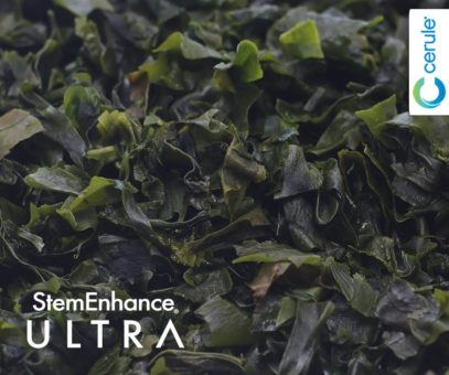 Undaria Pinnatifida Seaweed is a key ingredient in Cerule StemEnhance Ultra