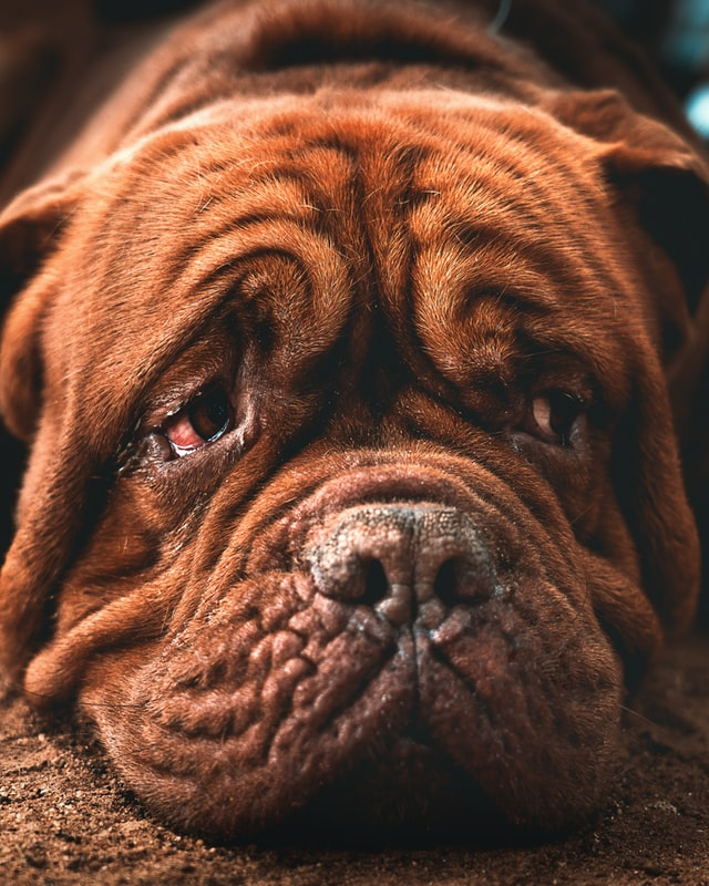 old dogs can feel much younger after consuming StemEnhance® Ultra
